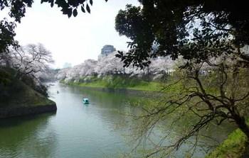 2018の桜.jpg