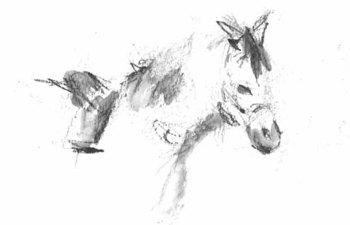 コマかわいい馬9.jpg