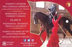 馬コルドバの観光1.jpg